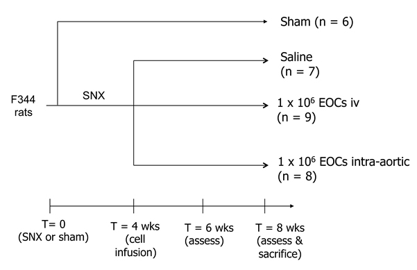 Figure 1. Study Design.